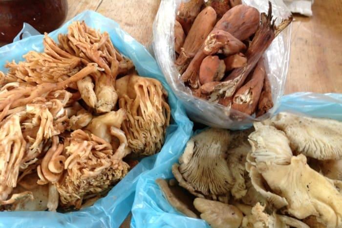 Wild Mushroom Culinary Adventure