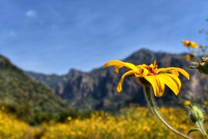 Beautiful Wildflower & Harvest Season